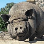 Gorbatschow das Schwein